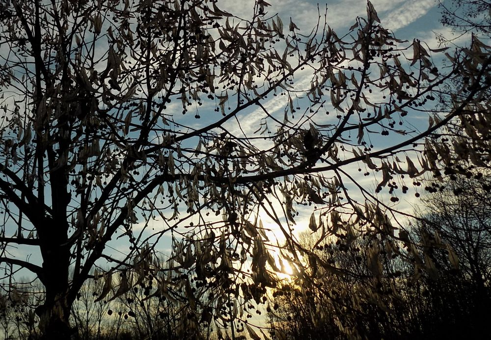 Photo in Nature #plants #sunset #sunsets