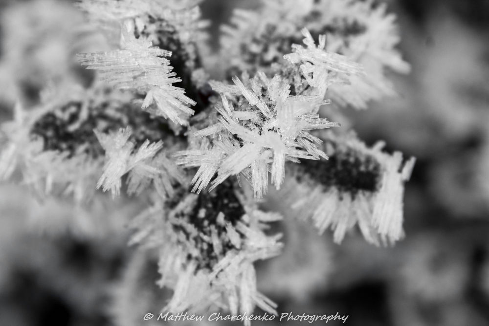 Photo in Macro #winter #ice #frost #leaves #cold
