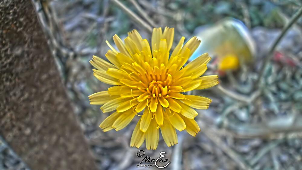 Photo in HDRI #flower #rose #yellow #details