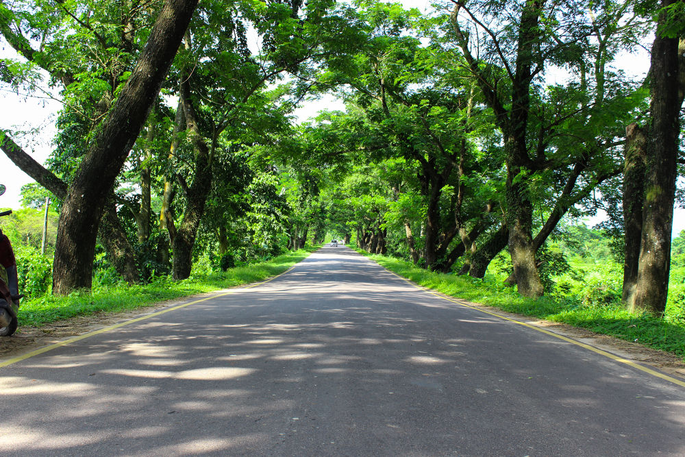 Photo in Nature #nature #road #street #trees #highway