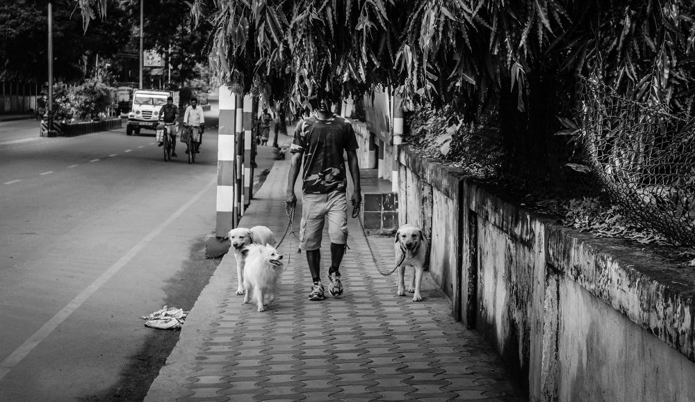 Photo in Street Photography #street #street photographer #monochrome #black and white #people #dogs #b/w #ace