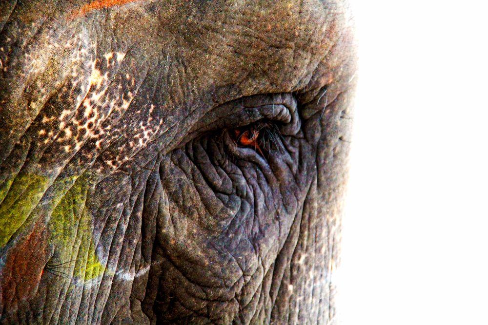 Photo in Random #elephant #memories #expressive #balanced #mammals