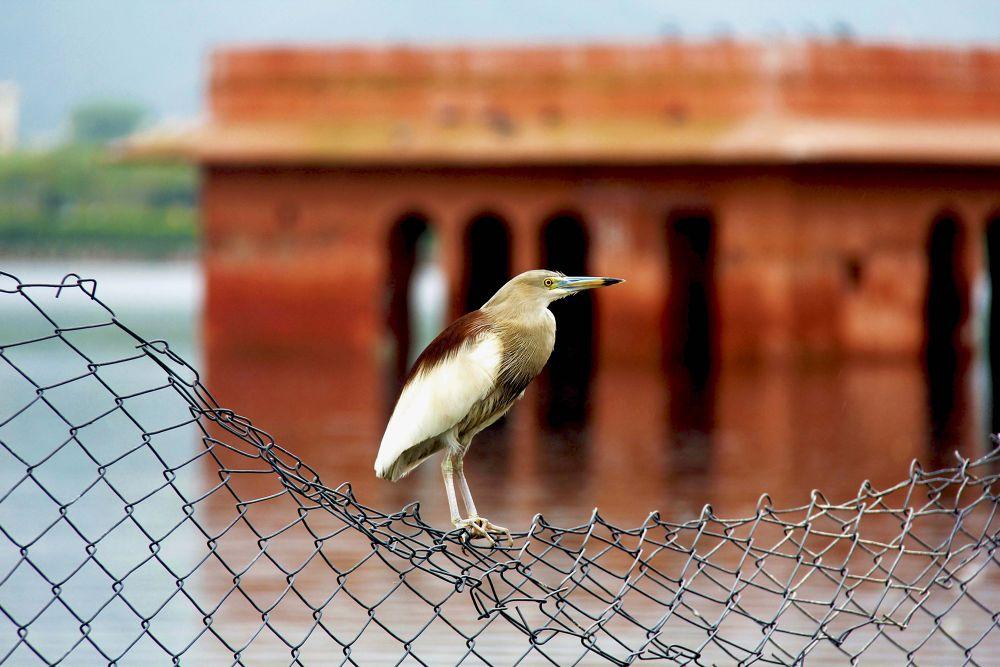 Photo in Random #bird #tour #thoughtful