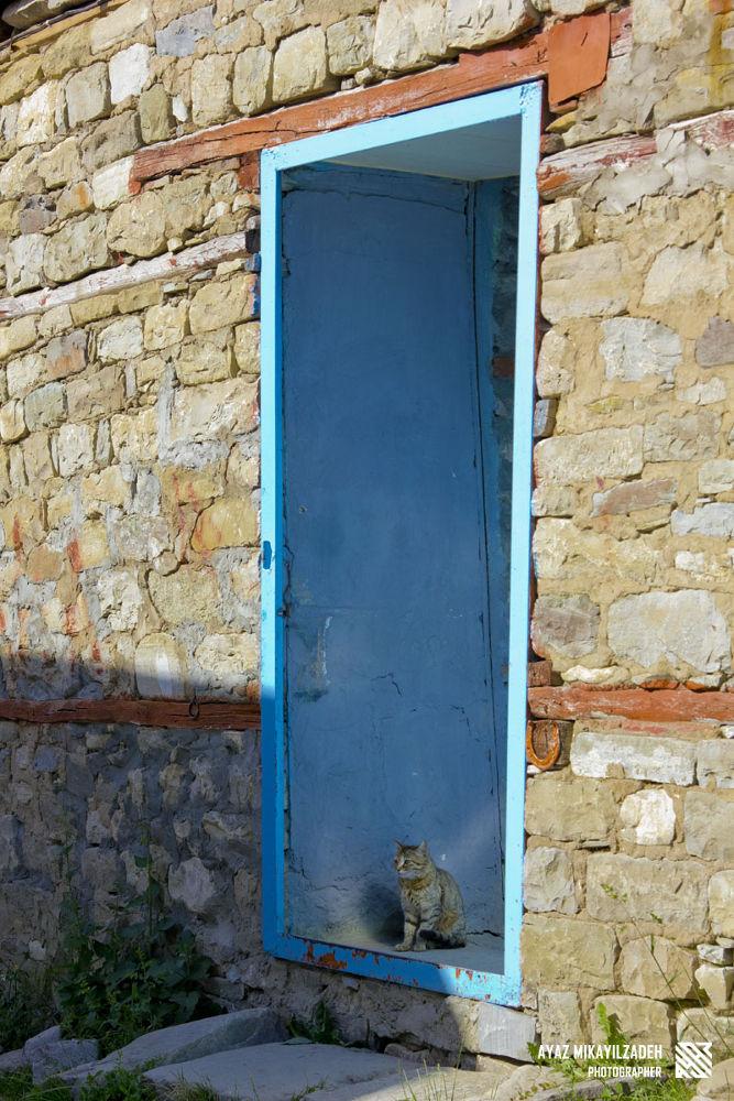 Photo in Animal #cat #old city #azerbaijan #lahich #door #animal