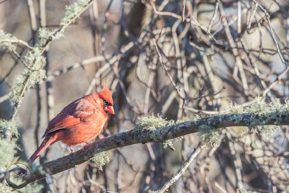 Photo in Animal #nature #trustompond #wildlife #winter