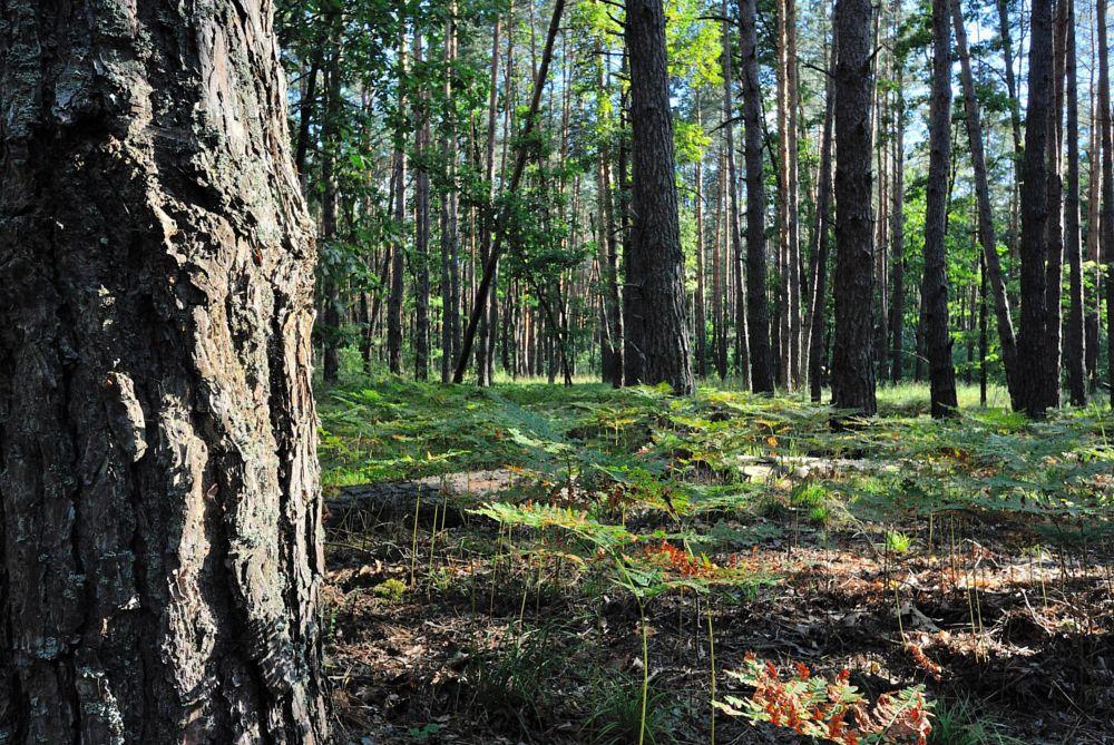 Photo in Landscape #ukaraine #nikon #nikon 1 #nikon one #nikon v1 #nikon 1 v1 #nature #trees #wood #tree #summer #youpic photography #youpic #photography #vadim beldy