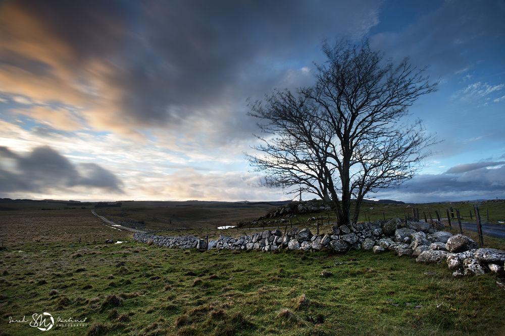 Photo in Landscape #nikon d800 #17-35 2.8 #arbre #tree #aubrac #sarah martinet