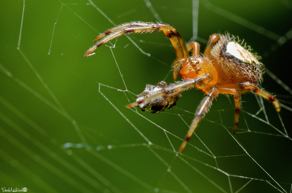 Photo in Macro #macro spider