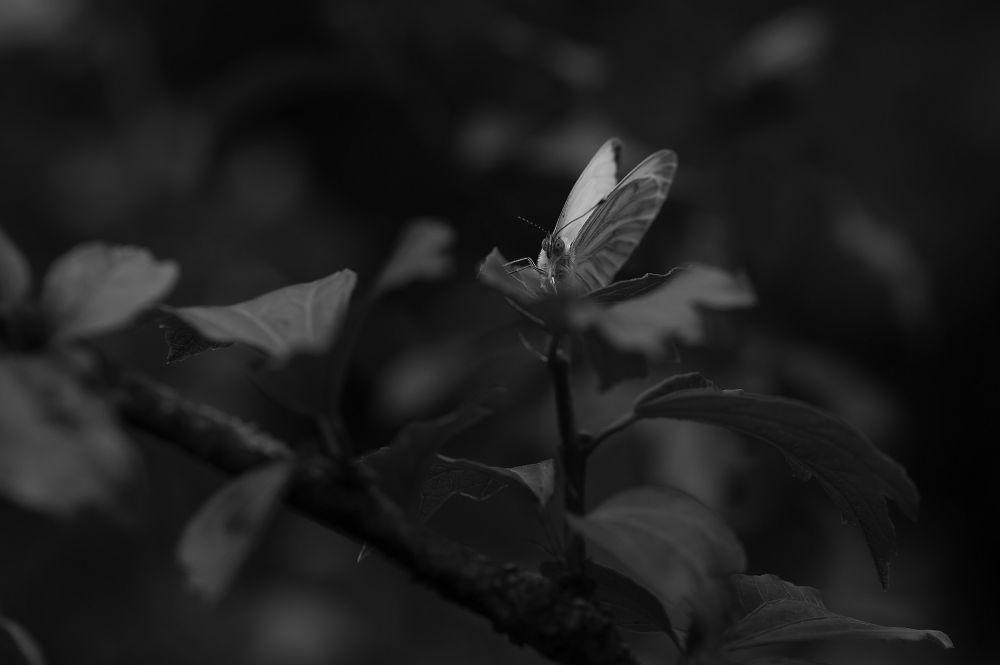 Photo in Nature #natuur #vlinder