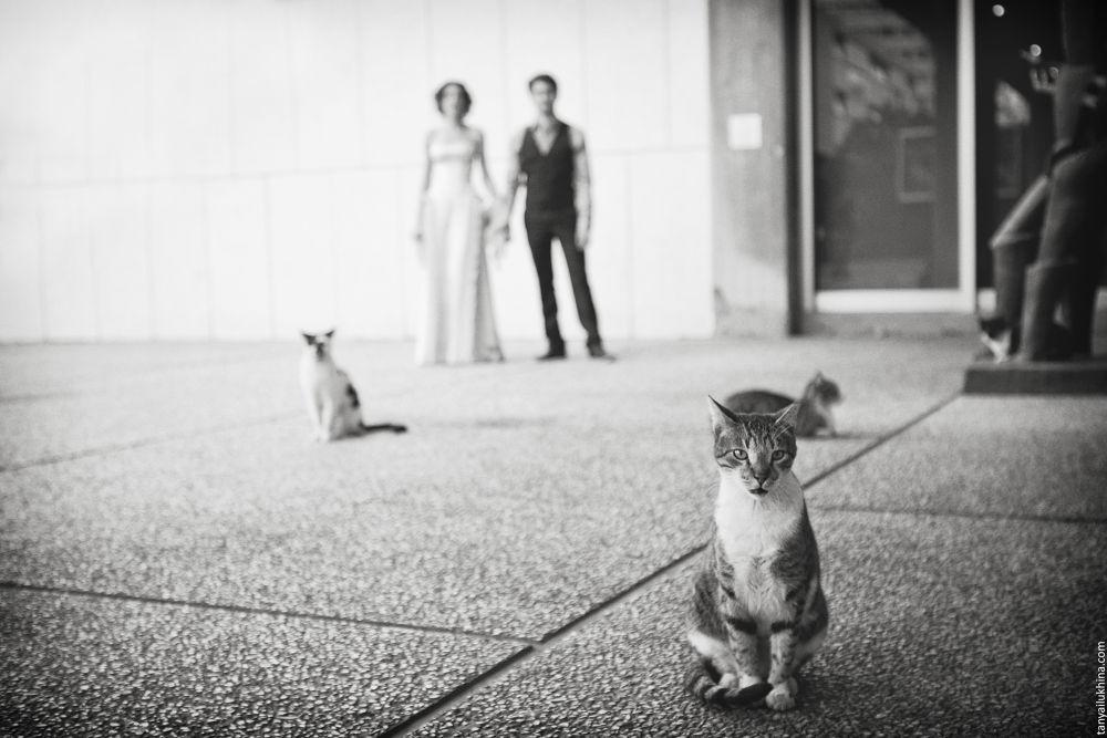 Photo in Wedding #ypa2013 #wedding #tel aviv #love #cat