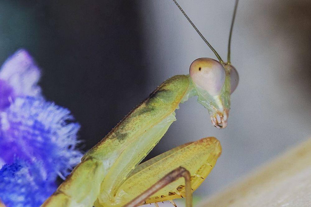 Photo in Macro #insect #interesting #nature #attitude