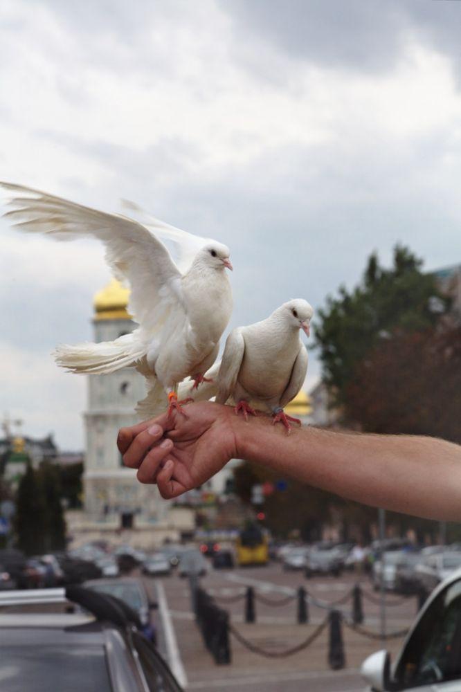 Photo in Street Photography #pigeons #peace #church #ortodoxal