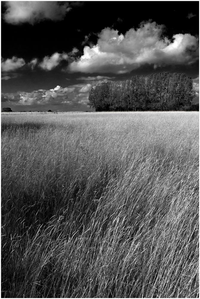 Photo in Landscape #worcestershire #clouds #trees #grain #shapes #crops #textures