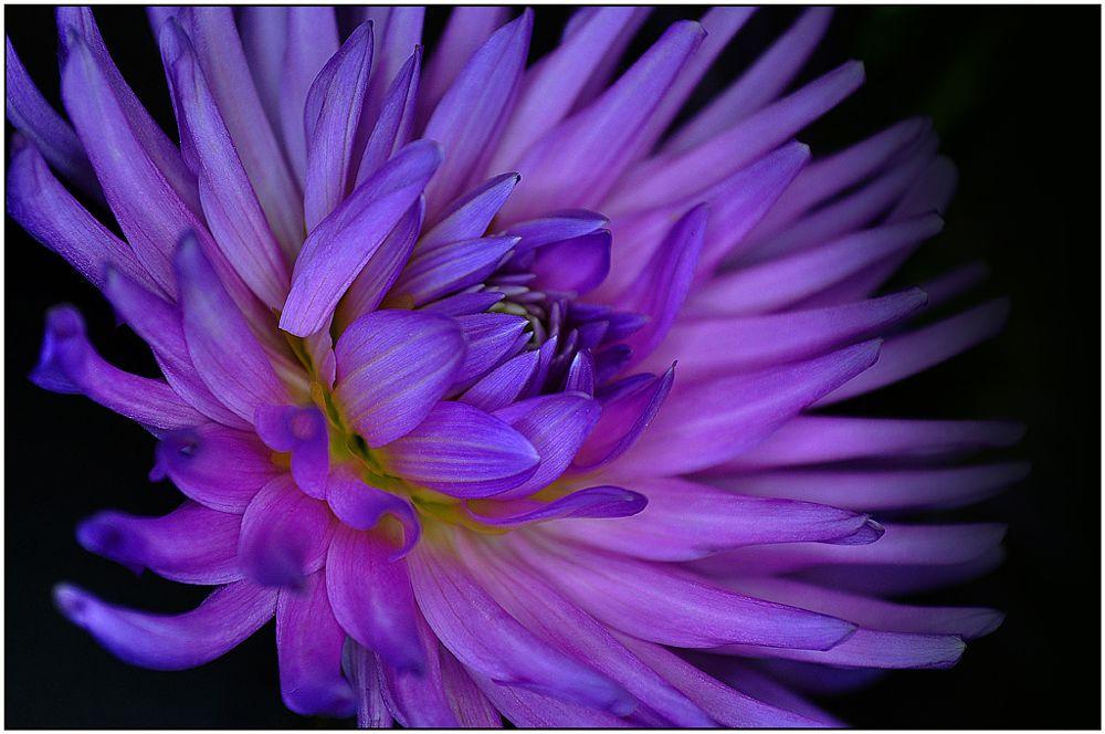 Photo in Fine Art #pink #flower #shot #in #the #dark