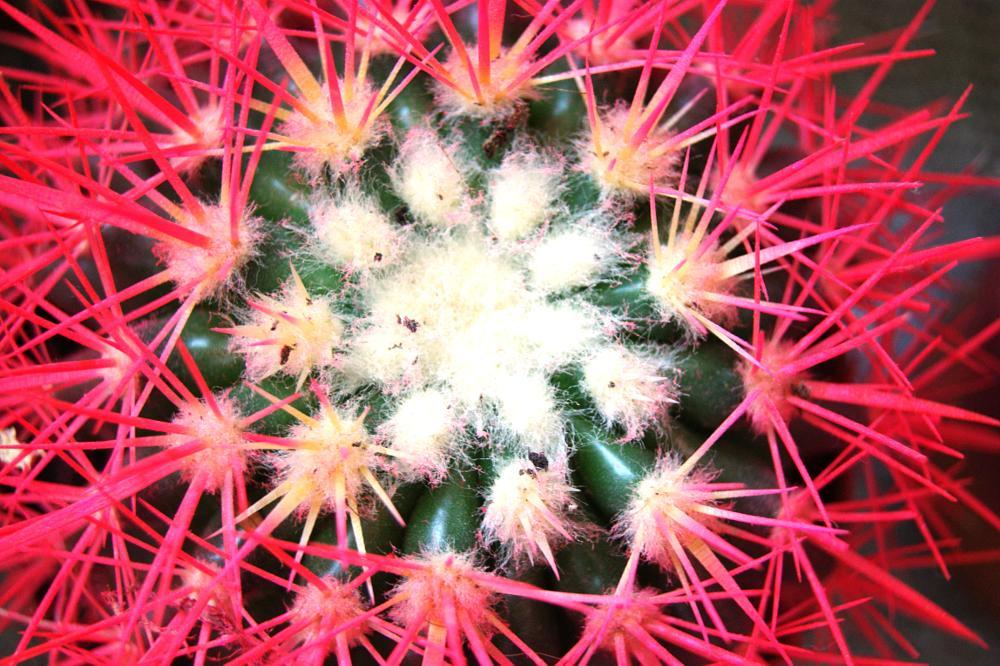 Photo in Nature #cactus #pink #home #adana #turkey