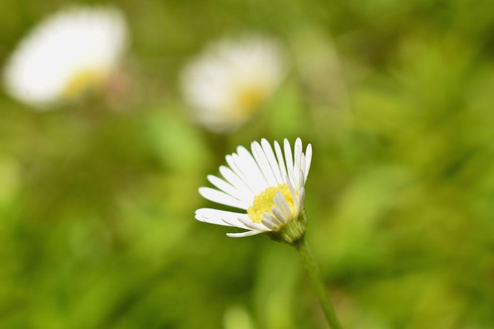 Photo in Macro #flower #white #colors #light #macro