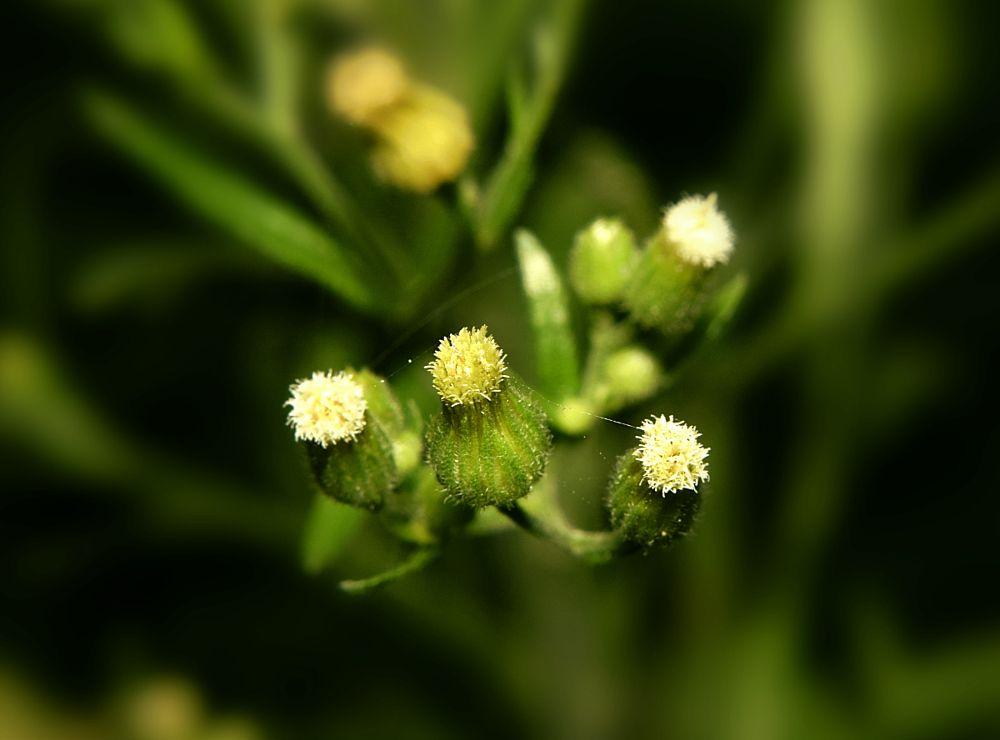 Photo in Macro #flowers #yellow #green #light #macro