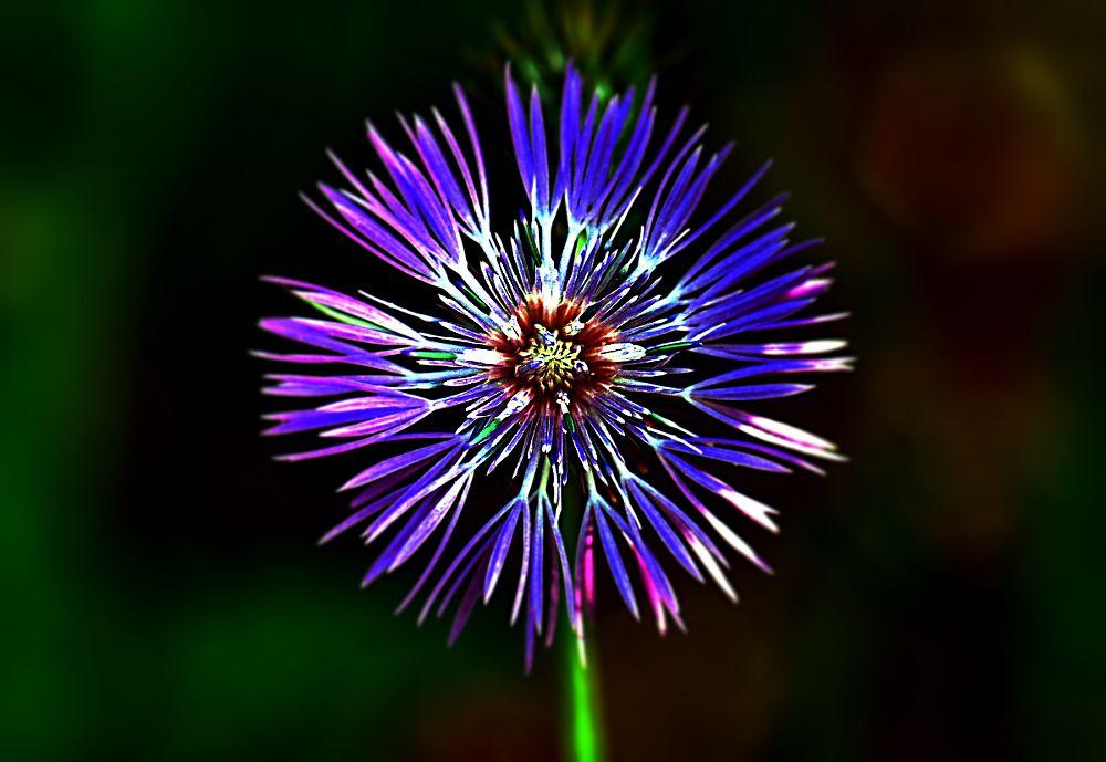Photo in Macro #flower
