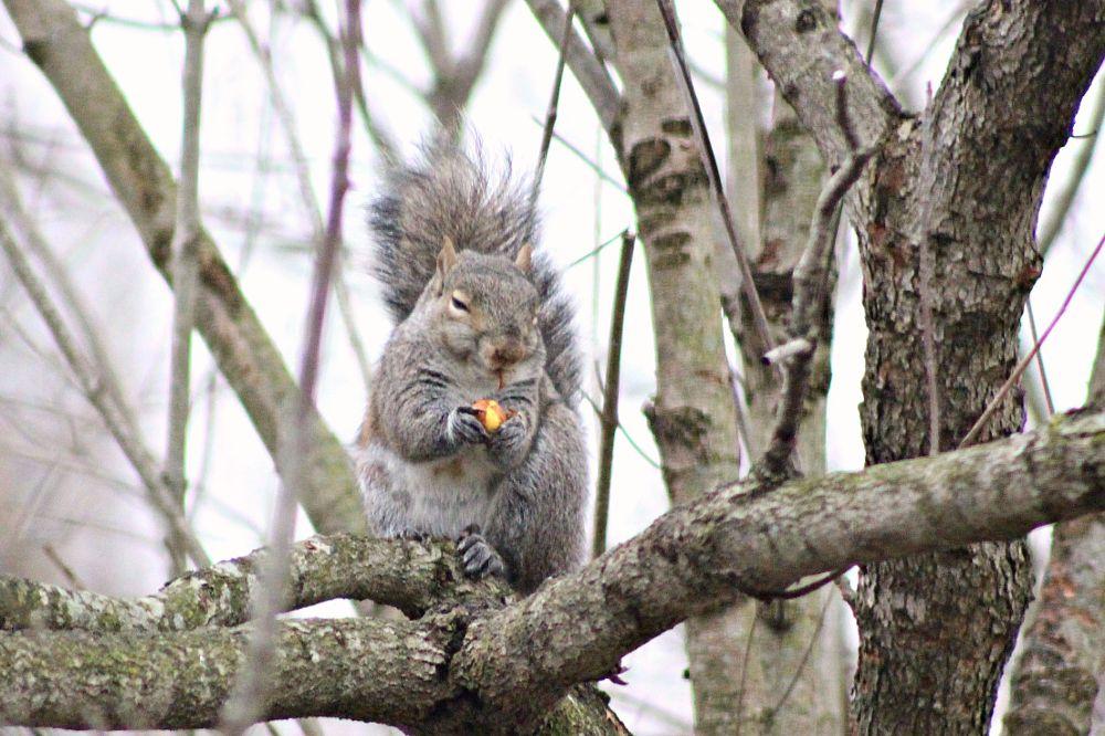 Photo in Animal #female squirrel #squirrel #rodent