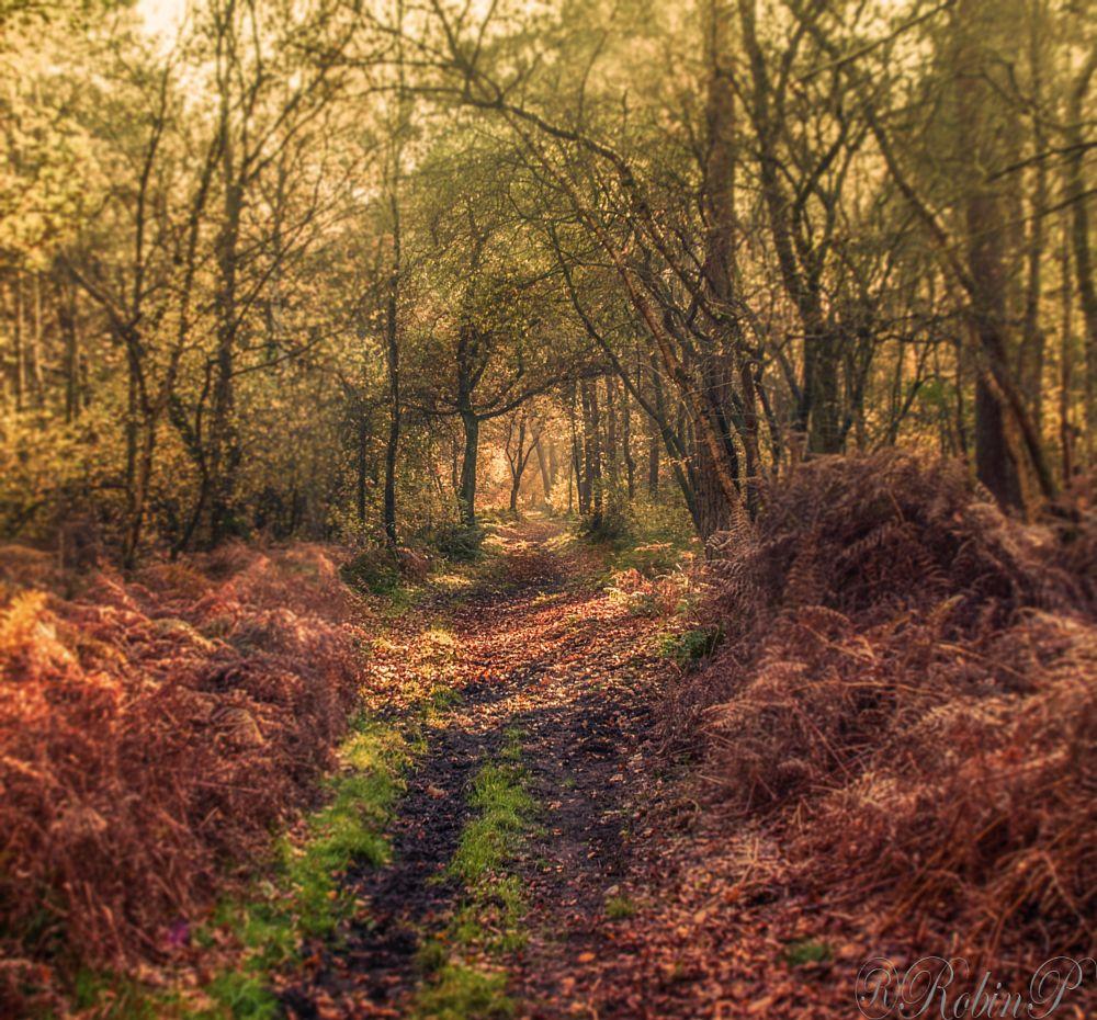 Photo in Landscape #sun #autumn #light #trees #forest