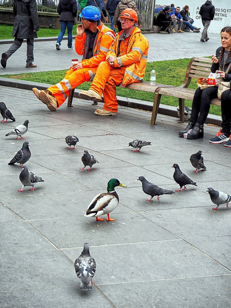 Photo in Cityscape #leicester square #tourists #pigeons #mallard duck #westminster