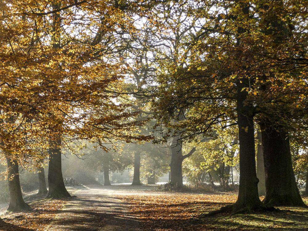 Photo in Landscape #autumn #birmingham #uk