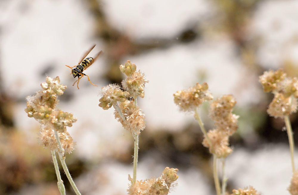 Photo in Animal #insecto #natural #vespa #animal