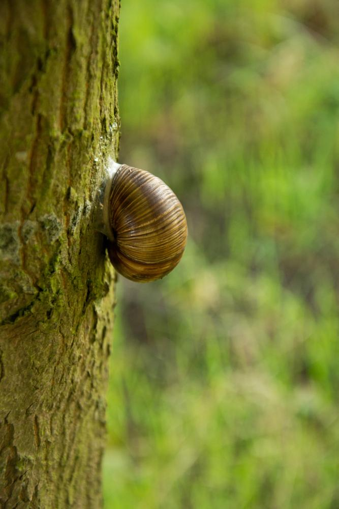 Photo in Animal #snail #nature #tree