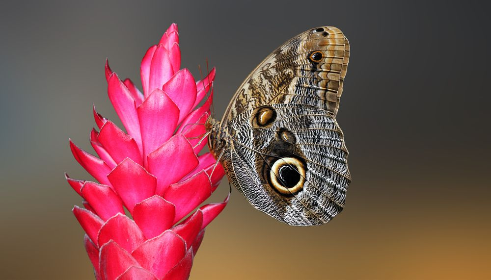 Photo in Animal #butterfly