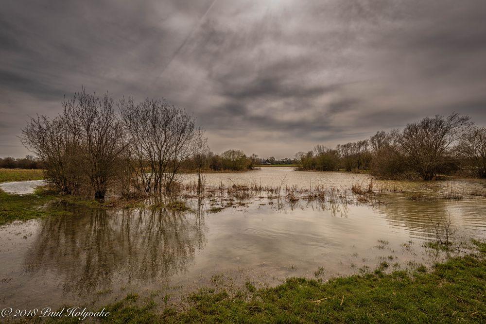 Photo in Landscape #lake #flood #trees