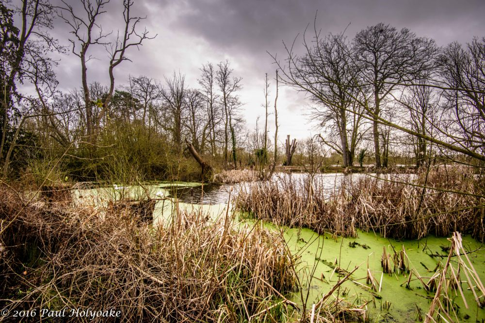 Photo in Landscape #brook #swans #trees