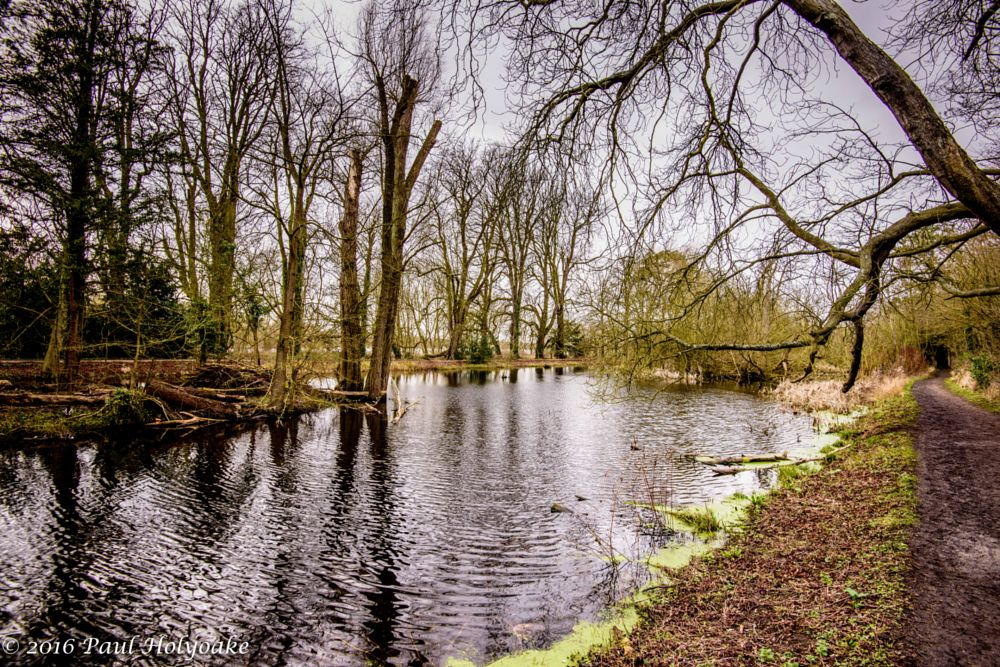 Photo in Landscape #brook #trees #path