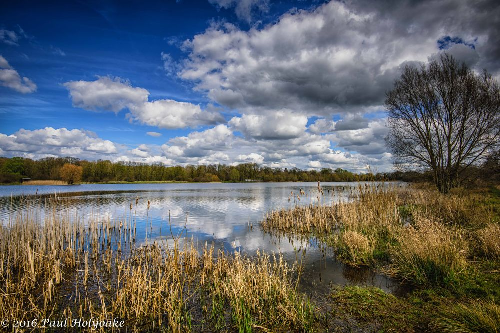 Photo in Landscape #lake #reeds #clouds