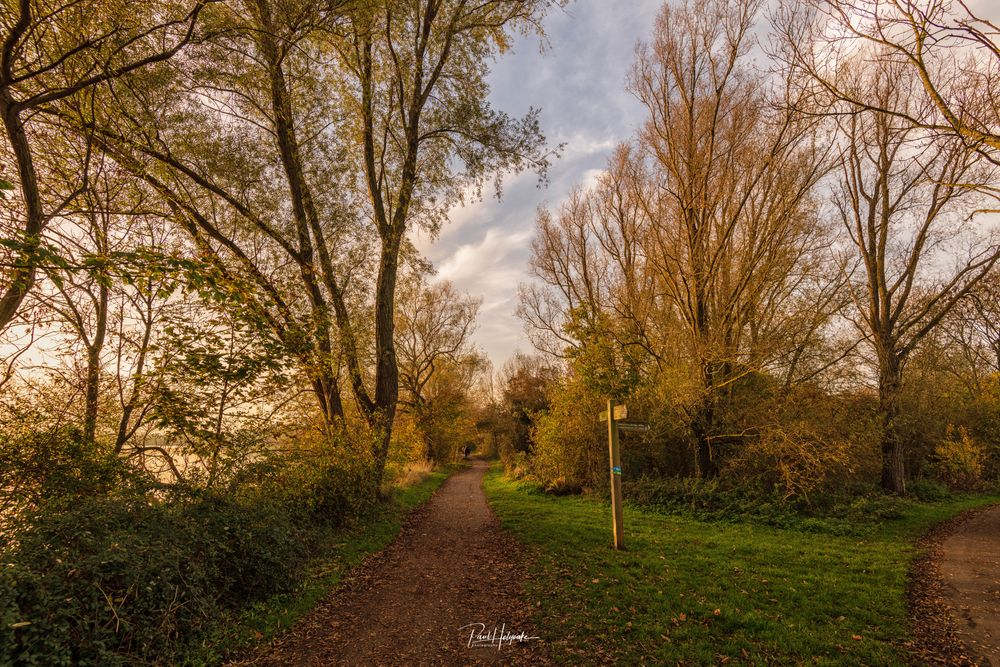 Photo in Landscape #forest #trees #path