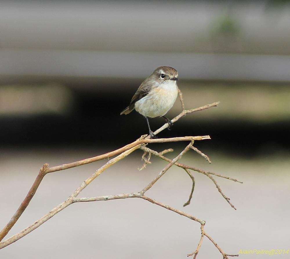 Photo in Nature #alain paitre #bird #reunion island #nature