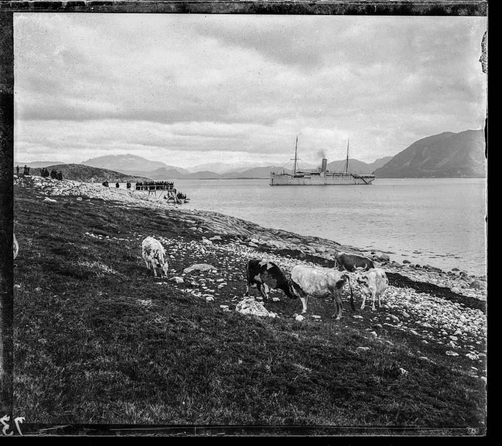 Photo in Vintage #vernacular #cows #boat #cruiser #tourists #1897
