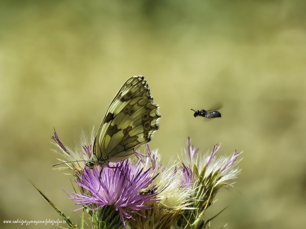 Photo in Nature #españa #spain