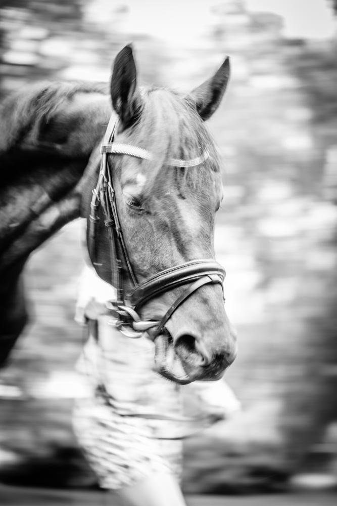 Photo in Animal #cheval #animaux #noir #blanc #nature