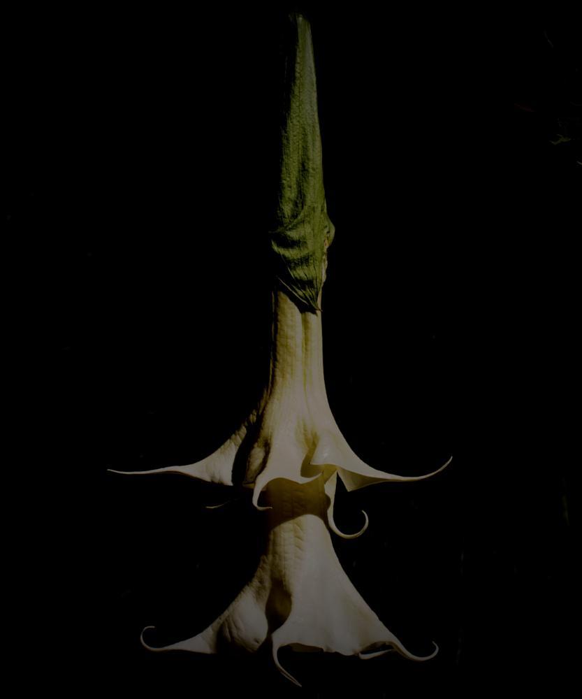 Photo in Nature #flower #suspended flower #garden #botanical garden