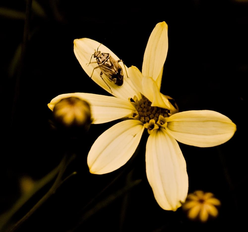 Photo in Nature #insect #bug #flower #summer #nature #macro