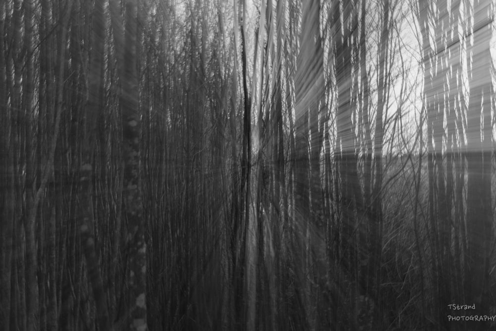 Photo in Abstract #woods #trees #forest #black and white #icm #zoom #light #lines #artistic
