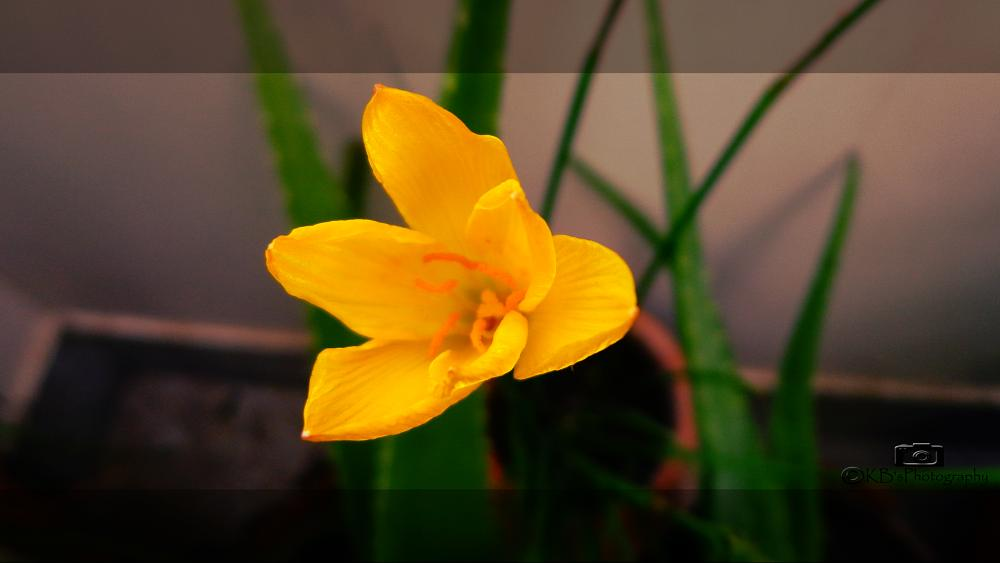 Photo in Random #yellow #color #flower