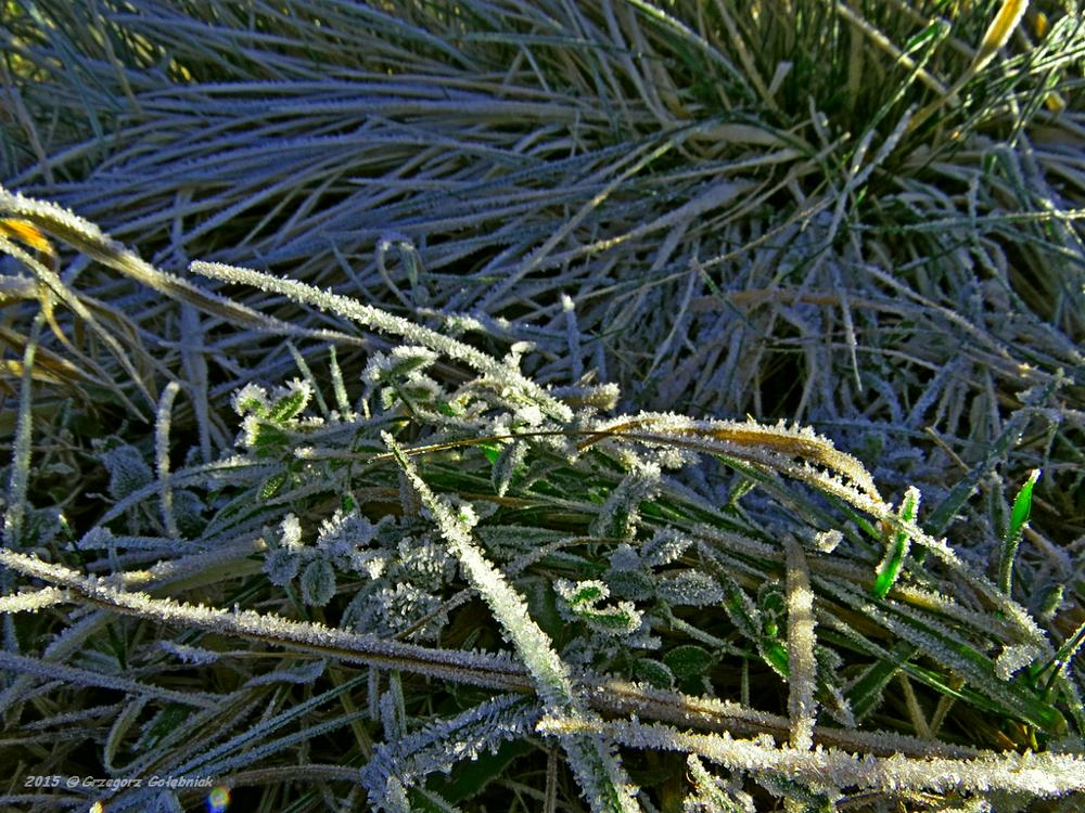 Photo in Nature #winter #plants #frozen #nature