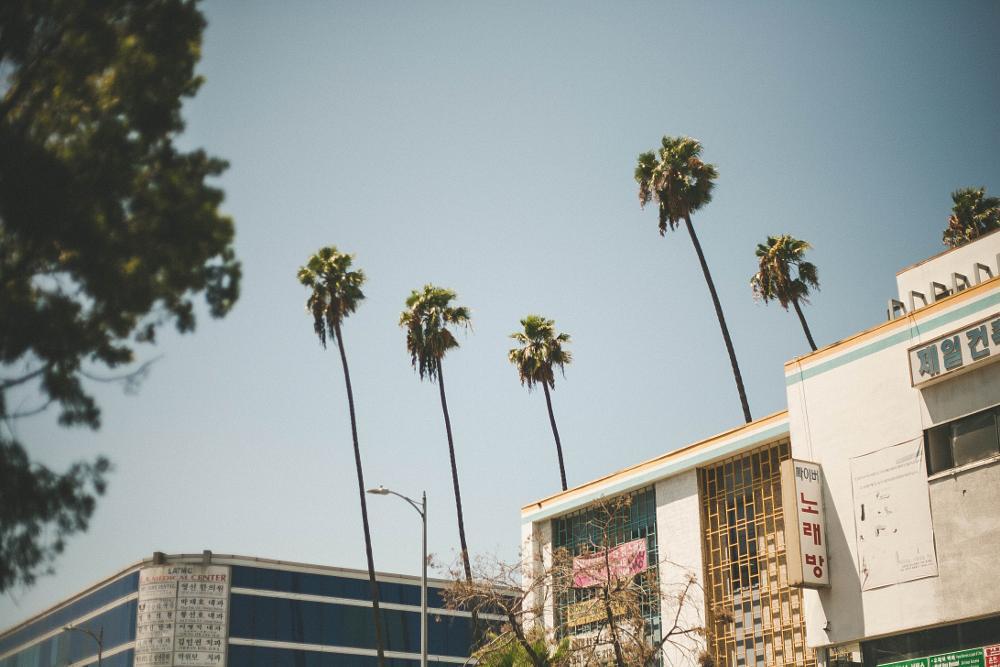 Photo in Street Photography #streetcontest #streetphotography #california #palmtrees