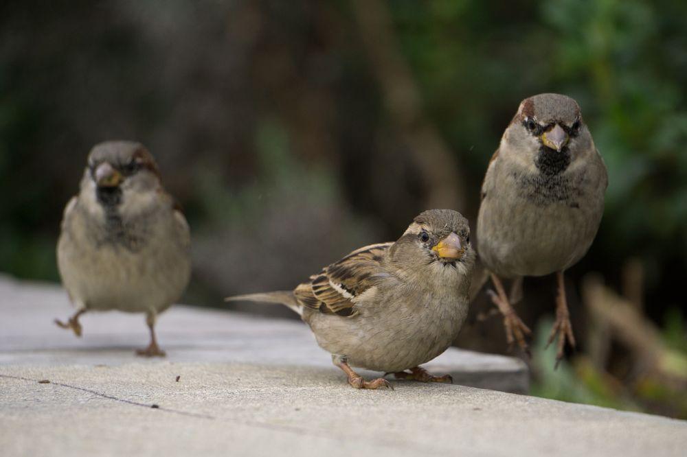 Photo in Animal #sparrows #birds #jump