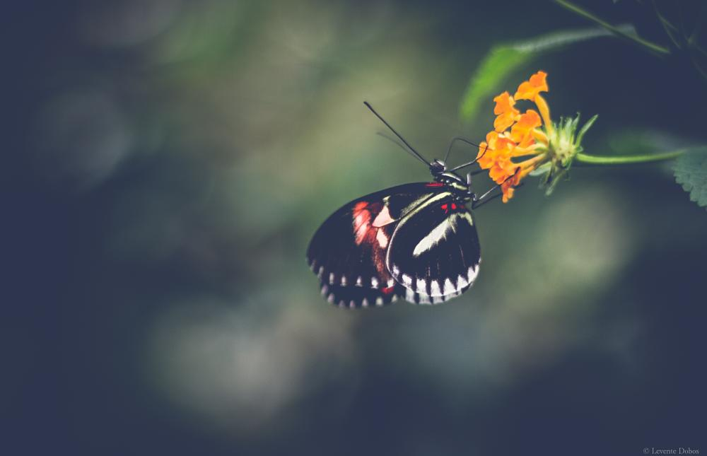 Photo in Nature #canon #7d #flower #butterfly