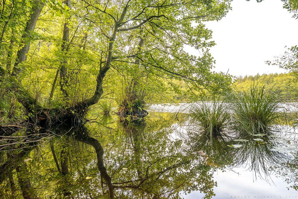 Photo in Nature #lake #forest #national park #water #reflection #mirror #green #jasmund #rügen #ruegen #germany #königsstuhl