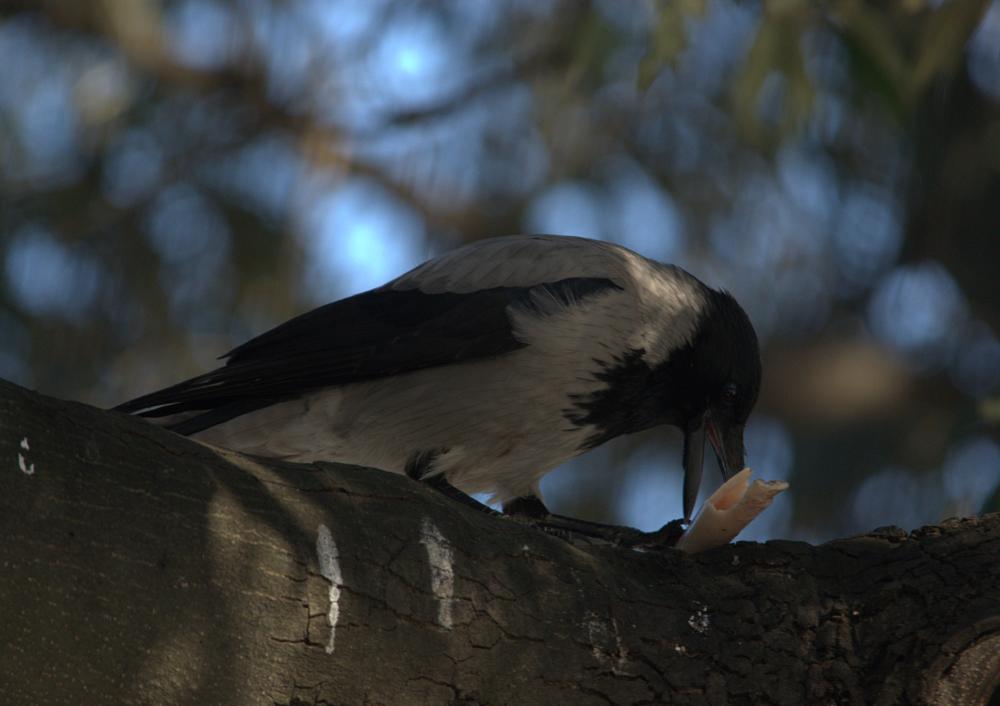 Photo in Animal #hard effort #clever bird #all effort for a bonus