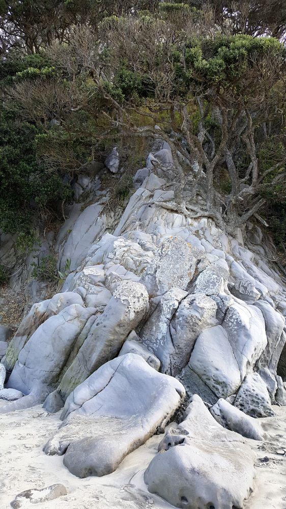 Photo in Landscape #pohutakawa #tree #rocks #sand stone #mangawhai #beach #sand