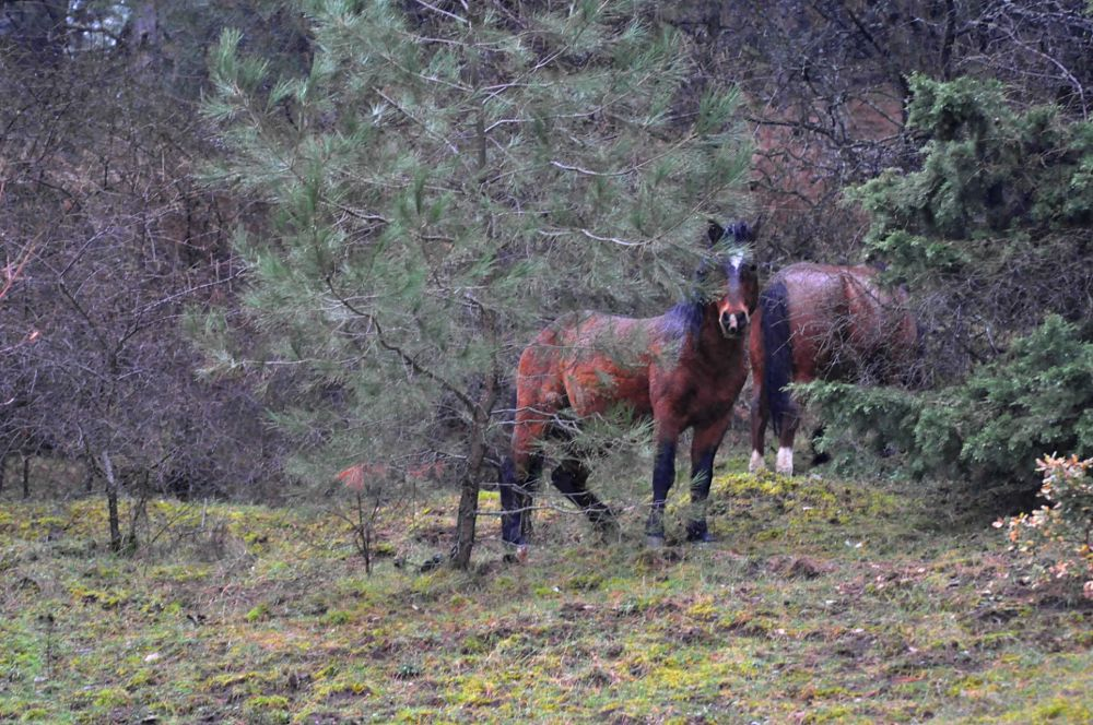 Photo in Animal #mustangs #nature #wild #spil